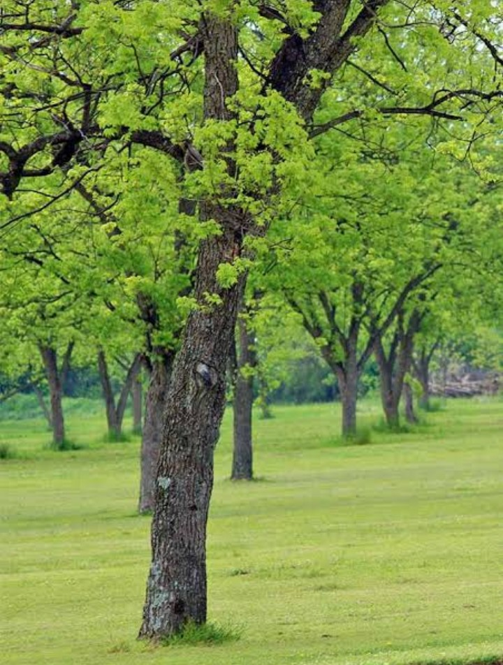 Green life - Trees